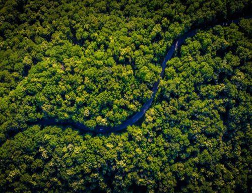 L'Azienda sostenibile: il prodotto delle nostre scelte individuali